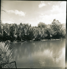 Krai Krai River view of Nipa vegetation