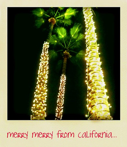 day 1 ~ palm trees gett'n their christmas on...