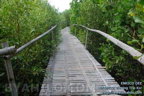 culajao mangrove eco park