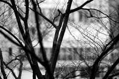 20100103_85_16 (peter-rabbit) Tags: film japan analog nikon asia 85mm f100 nikonf100   fujifilm osaka realaace nikkor reala kitaku fujicolor   f14d  silverfast   nikkor85mmf14 8800f osakacity canoscan8800f afnikkor85mmf14dif rawtherapee  aiafnikkor85mmf14dif  36 takenin2010