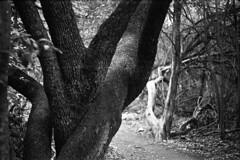 entwined legs (James Myslinski) Tags: austin kodak hc110 hp5 greenbelt retinaiia