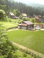 DVC00239 (Tamago Moffle) Tags: world heritage japan site village rice paddy  shirakawago shirakawa           gifupref shirakawamura  onodistrict