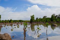 Grand Gaube (Ashwin CM) Tags: ocean blue sea sky nature landscape sand tide low grand mangrove mauritius gaube