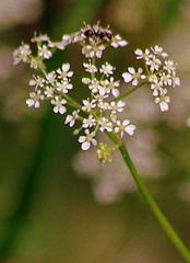 Gėlė (Zitute) Tags: gamta medžiai gėlės augalas
