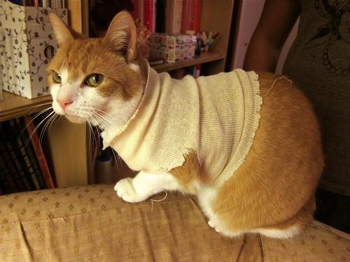 Riley in his custom cat T-shirt