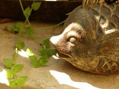 plant eating fish (arundatirao) Tags: plant ironfish brokenwindchime balconydecor