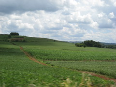 Brasilien (Paul Beppler) Tags: blue brazil sky verde green azul brasil corn interior landwirtschaft himmel wolke brasilien cu land nuvens blau rs feijo soja riograndedosul gruen korn clowds milho agricultura plantao deitsch sojabohne hunsrckisch hunsrckischplatt hunsriggisch campinadasmisses milhe