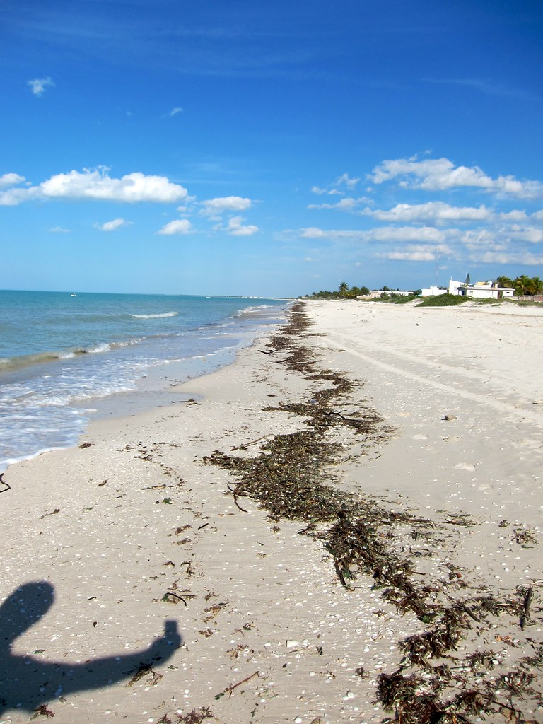 IMG_0348: Sisal Beach