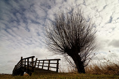 Twiske (Peter Bongers) Tags: holland tree dutch grass silhouette landscape boom willow gras nl waterland wilg terdata twiske peterbongers