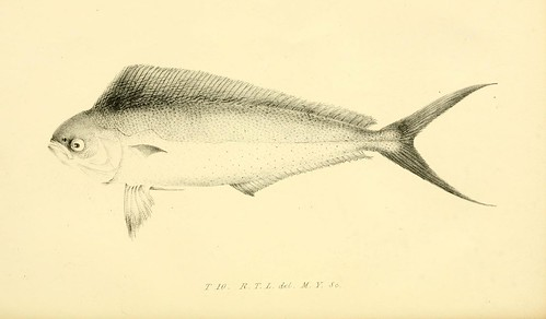 History of the fishes of Madeira