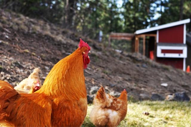 farm 9