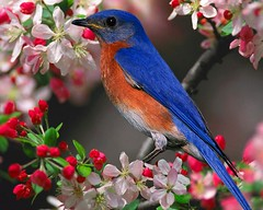 beautiful_bird_