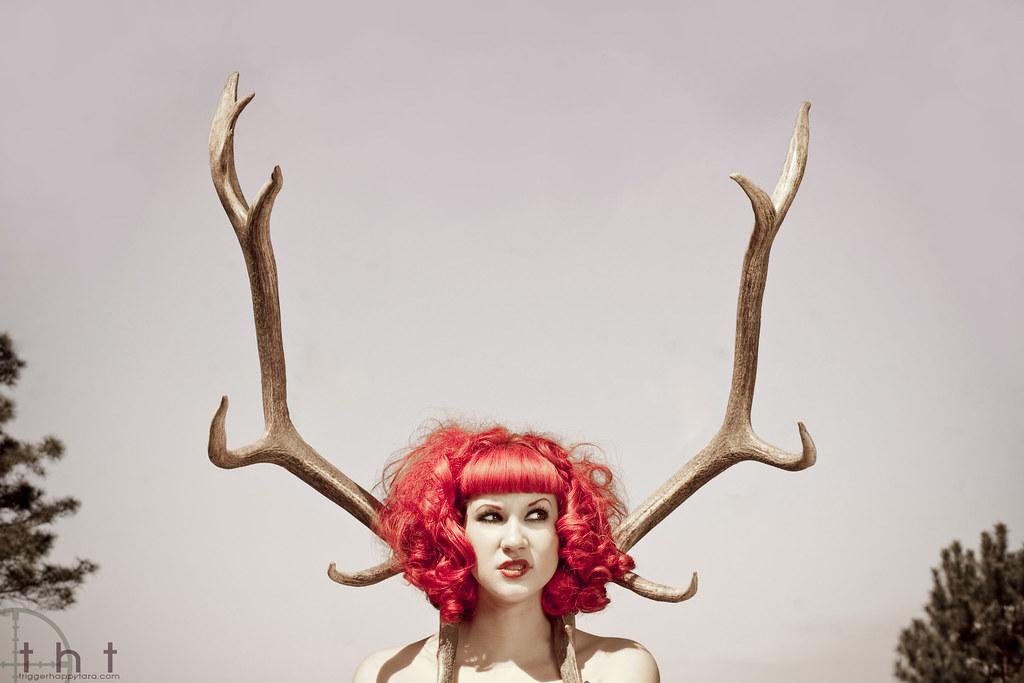 closeup antlers