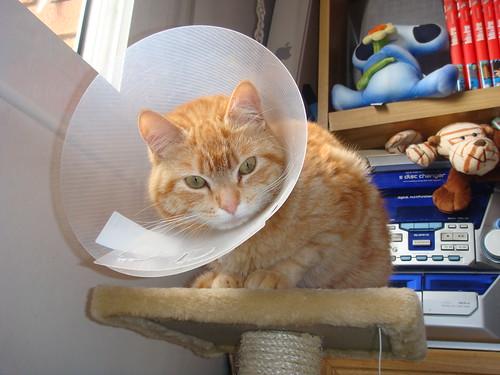 Gato-lámpara