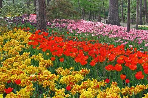 Garvin Woodland Gardens 10