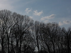 The Original Skyline (JohnnyPHreak) Tags: sky clouds daytime tress