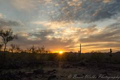 The Days Last Rays [Explored] (Arizphotodude) Tags: explored arizonaaznikonsunsetcactustokina1116mmf28