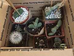 Stoney Creek Cactus cold hardy plants for cabin in Pine