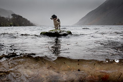 "8/52 ""Errrmm .. do you want to just hurry up a bit .. ??!!"" (JJFET) Tags: 8 52 weeks for dogs border collie rock wastwater littledoglaughedstories"