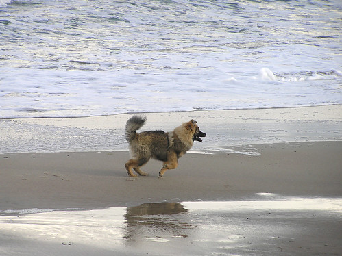 Superfuzzy doggie at the beach