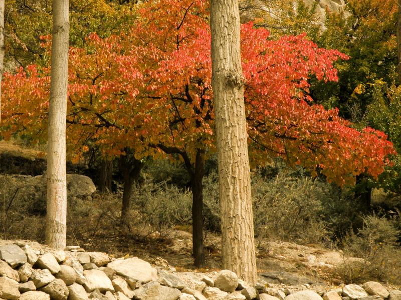 4063106859 41a7b20bff o - Stunning Beauty Of Hunza Valley Pakistan
