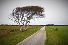 The road to nowhere .. (Bert Kaufmann) Tags: road holland tree netherlands nederland boom nl rue arbre paysbas baum olanda schiermonnikoog weg niederlande roadtonowhere flickrsbest kooiweg duinenschiermonnikoog kooipad grieenglop