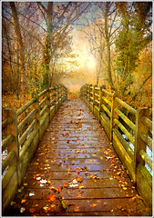 Passage (Jean-Michel Priaux) Tags: wood bridge autumn france tree art texture nature architecture illustration forest photoshop automne river painting way landscape deutschland nikon path perspective dream peinture dreaming strasbourg fairy alsace pont passage paysage rhein foret dreamcatcher anotherworld neuhof fret mattepainting d90 petitpont rservenaturelle priaux pontdebois rohrschollen theunforgettablepictures saariysqualitypictures