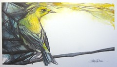 Bright Spot (Jennifer Kraska) Tags: bird yellow watercolor jennifer kraska yellowbird jenniferkraska