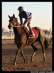 Pyro and the Aqueduct Gloooow (Spruceton Spook) Tags: aqueduct horseracing pyro richardmigliore cigarmile thanksgiving2009 whycouldntthisdaybelonger aqueductinnovemberislove