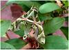 Oleander!! (Naseer Ommer) Tags: india moth kerala sphingidae macroglossinae alleppey alappuzha greenmoth oleanderhawkmoth daphnisnerii naseerommer fujifilmfinepixs20pro vosplusbellesphotos discoverplanet