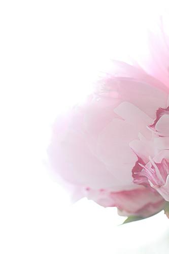 Bokeh pink