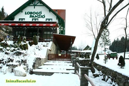 Baile Homorod Lobogo Romania (8)