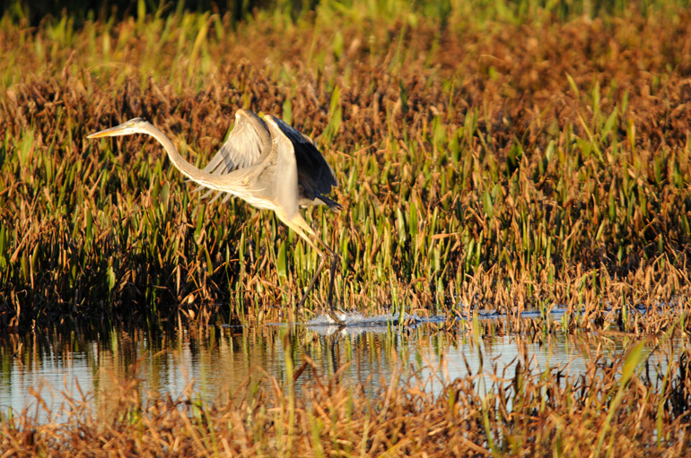 web_heronlanding_wetlands_0038_2557