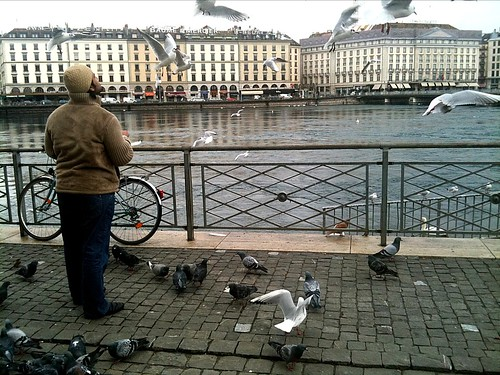 man feeding pigeons in Geneva