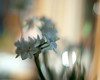 light and shadow (nosha) Tags: new flowers winter white flower green nature beautiful beauty 50mm newjersey bokeh january nj organic 2010 narcissus lightroom f12 blackmagic nikond200 nosha hbw 11600sec natureycrap bokehdots 0mmf0 11600secatf12