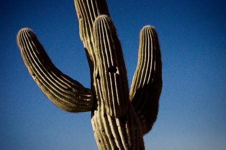 Arizona-11