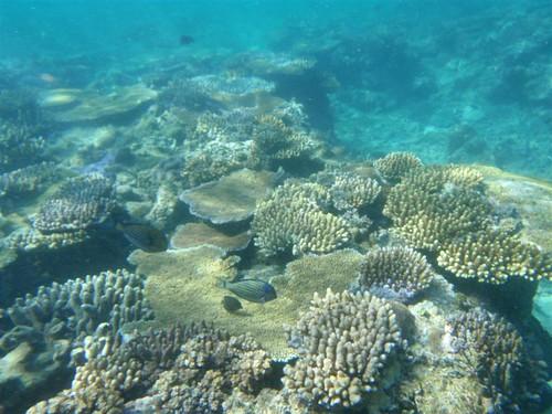 Arrecifes en Fiji