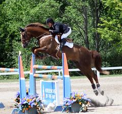 Grand Prix (Boomers592) Tags: horses horse sports jumping action michigan grandprix traversecity horseshow equestrian equine bigjumps