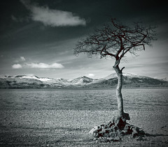 the lonely tree (Dove*) Tags: blackandwhite cloud snow mountains tree scotland lochlomond milarrochy daarklands exploreno7