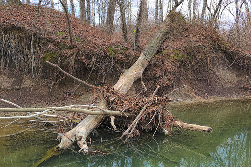 Fallen tree in Fishpot Creek, at Vance Trails Park, in Valley Park, Missouri, USA
