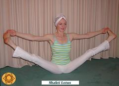 Shakti Lotus