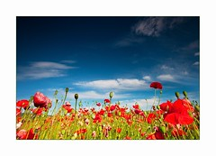 Napimdk (Botond Horvth) Tags: red summer flower color green nature landscape spring nice nikon hungary sigma explore poppy 1020mm espritu d90 botond horvth
