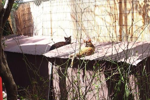 Today's Cat@2010-03-24