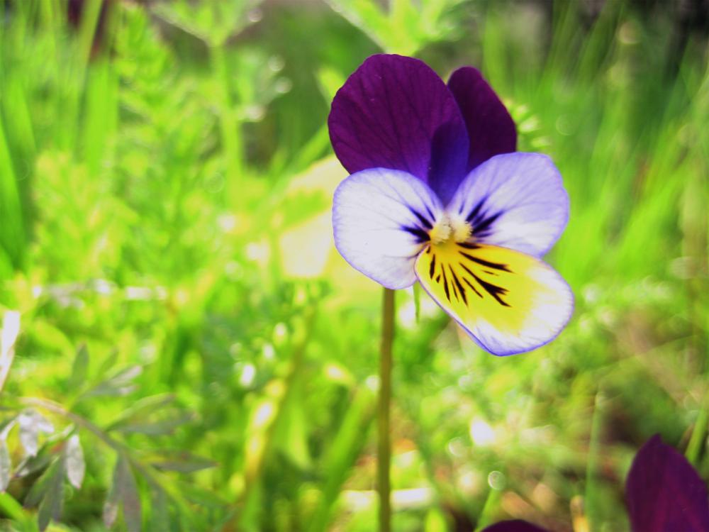 tiny wildflower