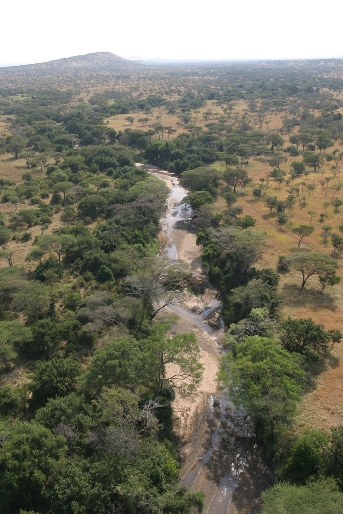 Aerial Photo of the Grumeti River
