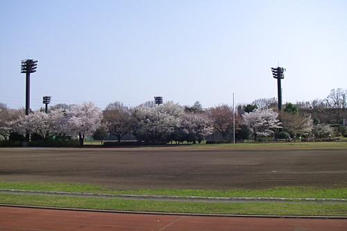 Race track sakura