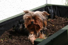 My funny dog