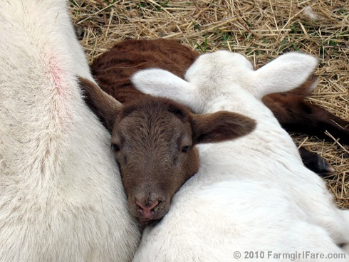 Snuggle Up (4)