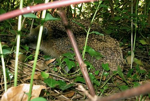 We found a hedgehog.
