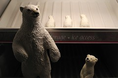 snow bears (omoo) Tags: newyorkcity ice kitchen apartment westvillage refrigerator freezer polarbears greenwichvillage snowbears alwayscold freezerbears
